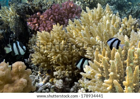 Tropical Fish and Coral Ree - stock photo