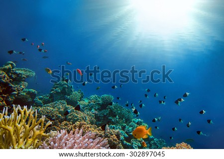 Tropical Fish and Coral Ree in the Red Sea. Egypt - stock photo