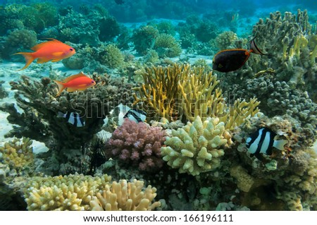 Tropical Fish and Coral Reef - stock photo
