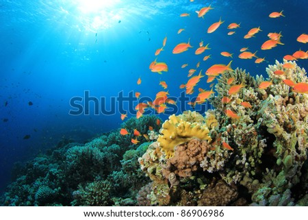 Tropical Fish and Coral Reef in Sunlight - stock photo
