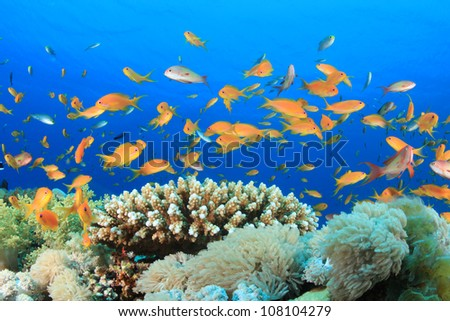 Tropical Fish and Coral Reef in the Red Sea - stock photo
