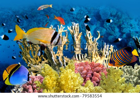 Tropical Fish and Coral Reef in the Red Sea, Egypt. - stock photo