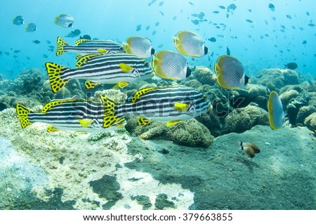 Tropical fish and coral reef of Tulamben, Bali, Indonesia.