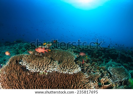 Tropical fish and hard corals on a beautiful coral reef - stock photo