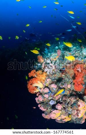 Tropical fish around a deep water coral pinnacle - stock photo