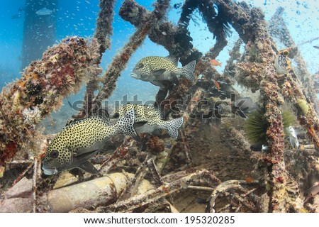 Tropical fish around a shipwreck underwater - stock photo