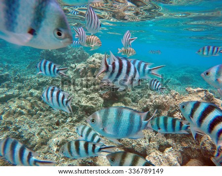 Tropical Fish at Bora Bora, South Pacific Ocean - stock photo