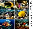 Tropical fish collection, Nemofish, Abudefduf sexfasciatus, Masked Butterfly Fish, Chaetodon fasciatus - stock photo