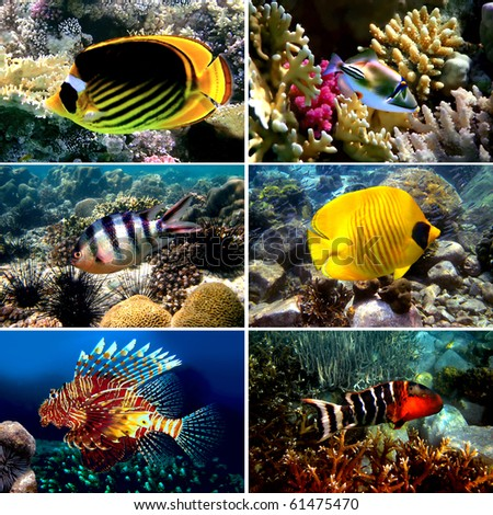 Tropical fish collection, Nemofish, Abudefduf sexfasciatus, Masked Butterfly Fish, Chaetodon fasciatus - stock photo