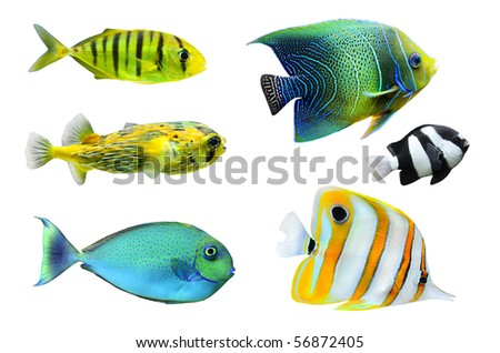 Tropical fish collection on white background - stock photo