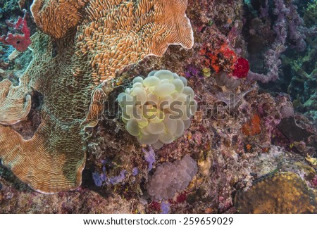 Tropical fish, corals and sponges around a thriving tropical coral reef  - stock photo