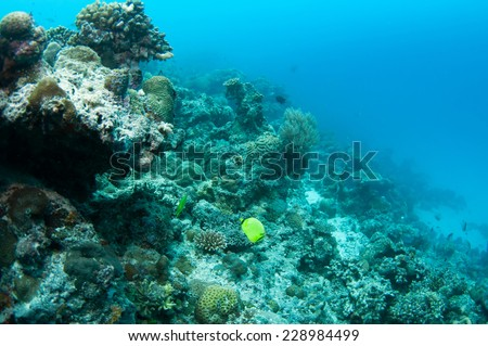 Tropical fish, corals and sponges around a thriving tropical coral reef, Palawan.