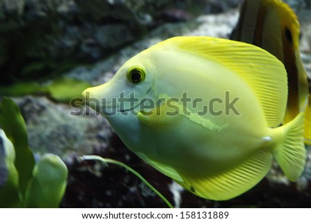 Tropical fish of many colors - stock photo