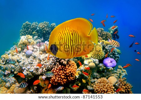 Tropical Fish on a coral reef. - stock photo