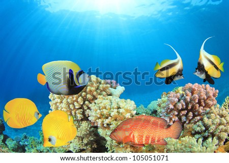 Tropical Fish on a Coral Reef in clear blue ocean - stock photo
