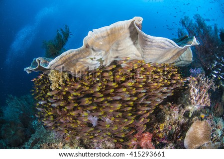 Tropical Fish on Coral Reef in Raja Ampat - stock photo