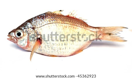 Tropical fish on white background - stock photo