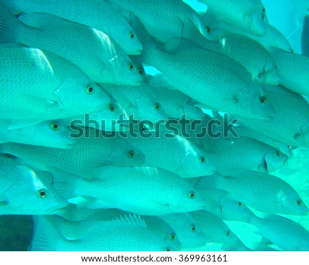 Tropical fish school under an ocean pier - stock photo