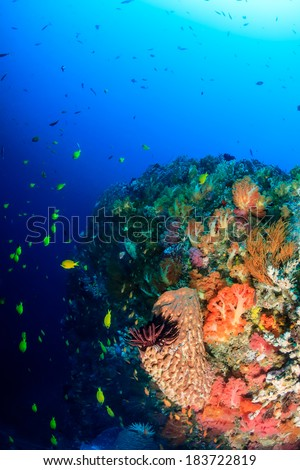 Tropical fish, soft corals and sponges on a deep tropical reef - stock photo