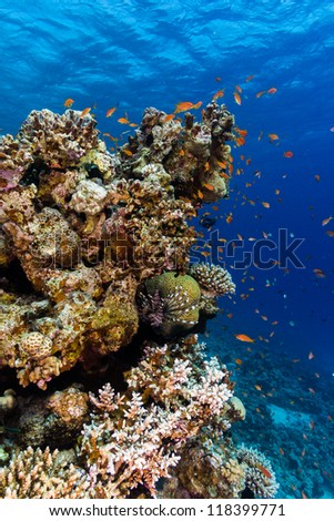 Tropical fish swarm around a pinnacle on a coral reef - stock photo