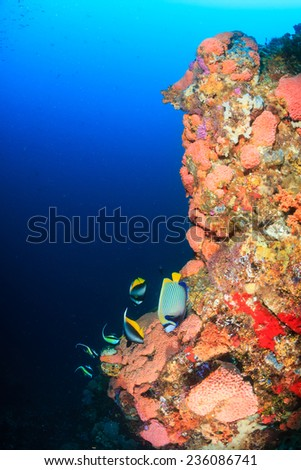 Tropical fish swim along a coral reef wall in clear water - stock photo