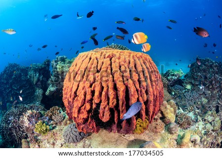 Tropical fish swimming near a large sponge on a coral reef - stock photo