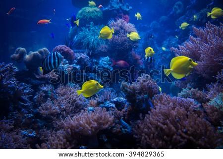 tropical Fish.  Underwater world - stock photo