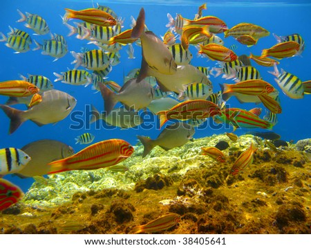Tropical fishes and coral reef