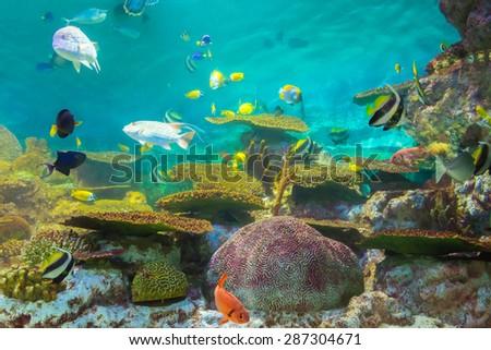 tropical fishes at Rayong aquarium, Thailand - stock photo
