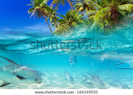 Tropical fishes in the water of Caribbean Sea - stock photo