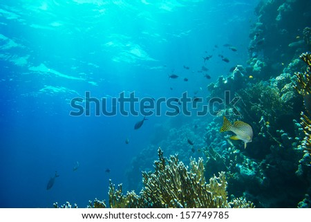 tropical fishes on a coral reef  - stock photo
