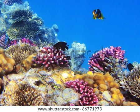 Tropical fishes on the coral reef in Red Sea, Egypt - stock photo