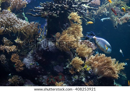 Tropical fishes swimming in the coral reef. Wild life animals. - stock photo