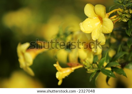 Tropical flower. - stock photo