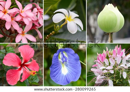 Tropical flower collection