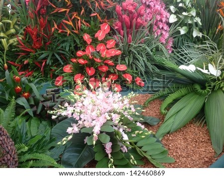 Tropical flower display at Chelsea Flower Show - stock photo