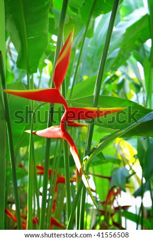 Tropical flower Heliconia - stock photo