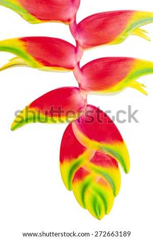 Tropical Flower Heliconia, isolated on white, close up - stock photo