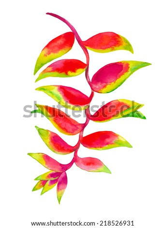 tropical flower heliconia watercolor painting - stock photo