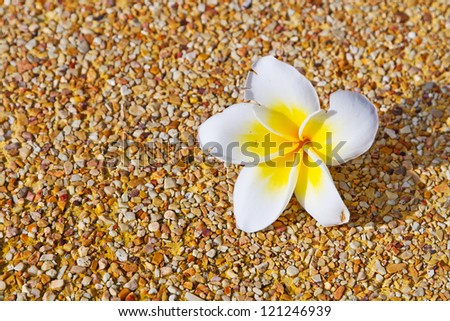 Tropical flower over sandy background