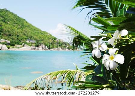 Tropical flowers frangipani against bay Thongtakian,. Koh Samui, Thailand - stock photo