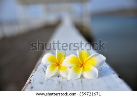 Tropical flowers frangipani on wood - stock photo