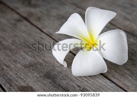 Tropical flowers frangipani on wood - stock photo