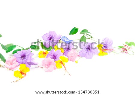 Tropical flowers isolated on white