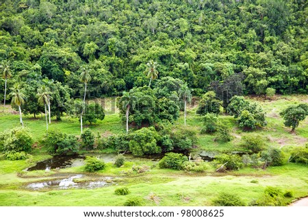 Tropical forest - stock photo