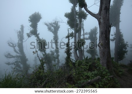 Tropical forest destroyed by volcanic eruption on the slopes of Mount Merapi (2,930 m) in Central Java, Indonesia. - stock photo