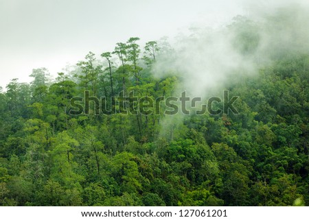 Tropical forest early morning landscape , thailand - stock photo
