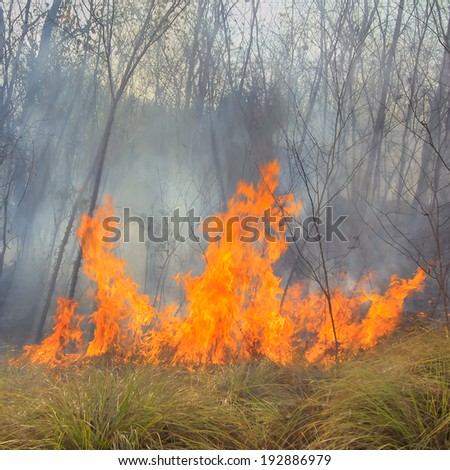 Tropical forest fire  - stock photo