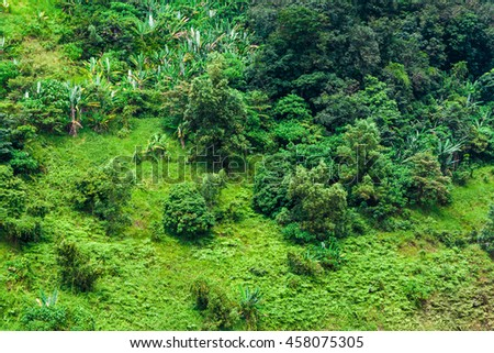 Tropical forest hill slope