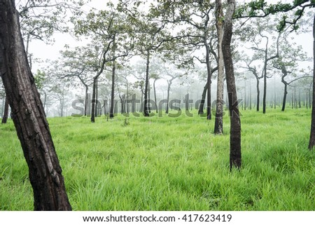 tropical forest in morning with fog